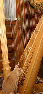 harp-+-helper-7240